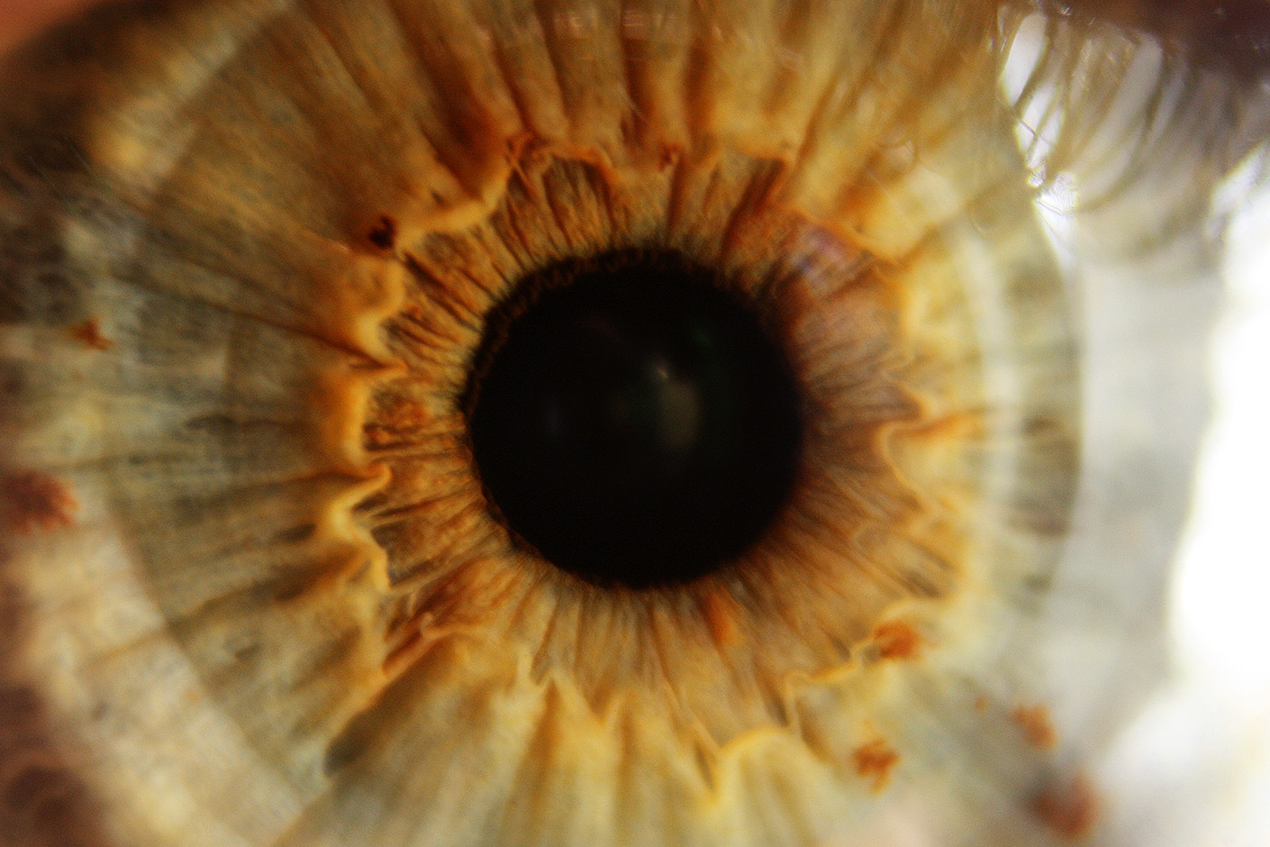 macro photo of hazel eye zoom